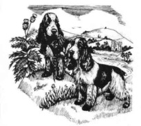 The Cocker Spaniel Club Of Scotland